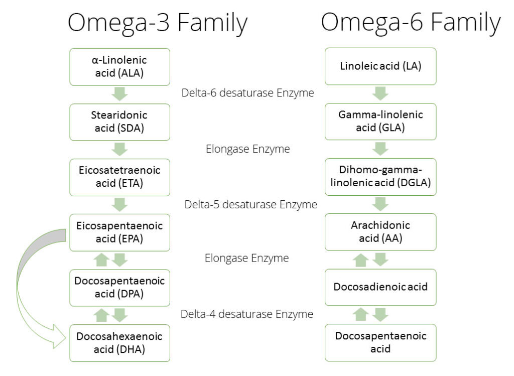 omega-3-6-shared-enzymes