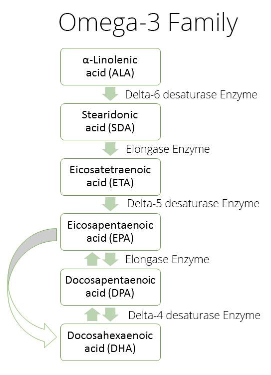 omega-3-cascade